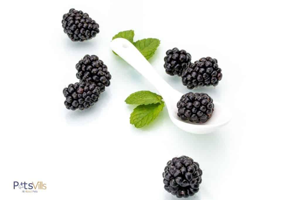 white spoon with fesh blackberries