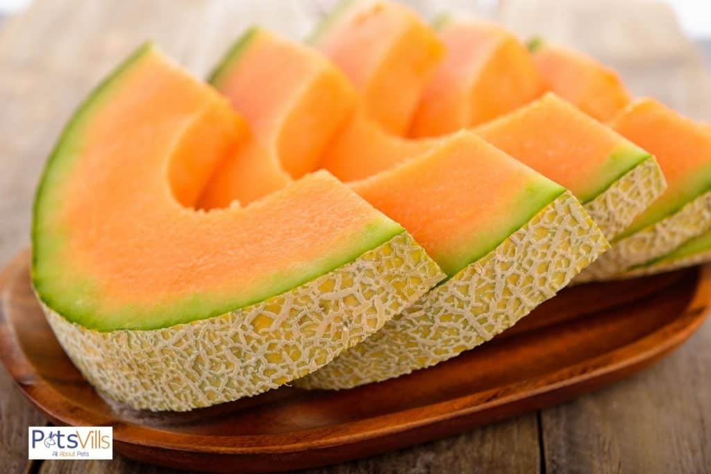 fresh slices of cantaloupes on a wooden plate but can bearded dragons eat cantaloupe?