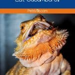 orange bearded dragon looking at the top while mouth is widely open