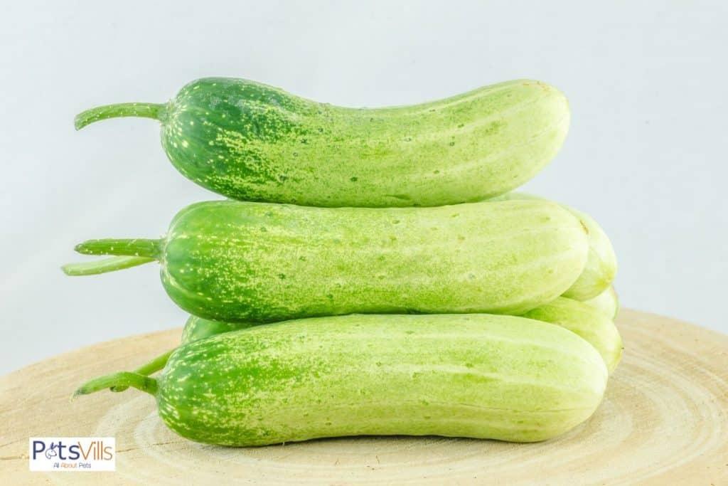 fresh cucumbers on the chopping board: can bearded dragons eat cucumbers?