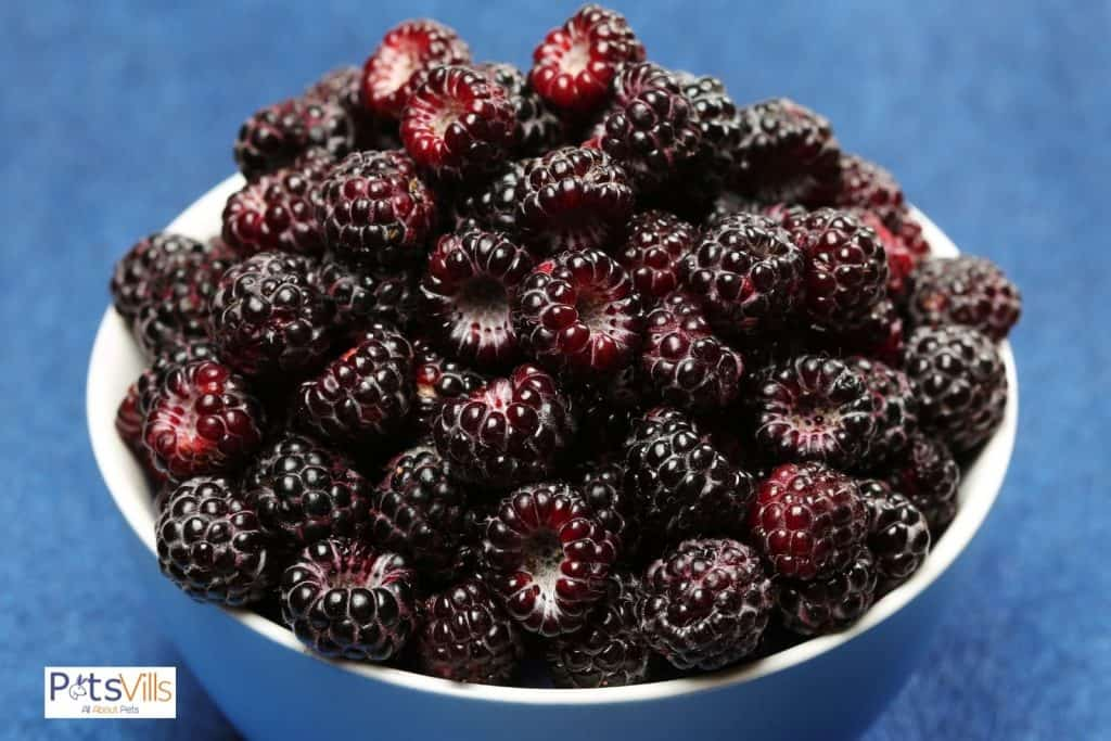 fresh black berries on a ceramic white plate