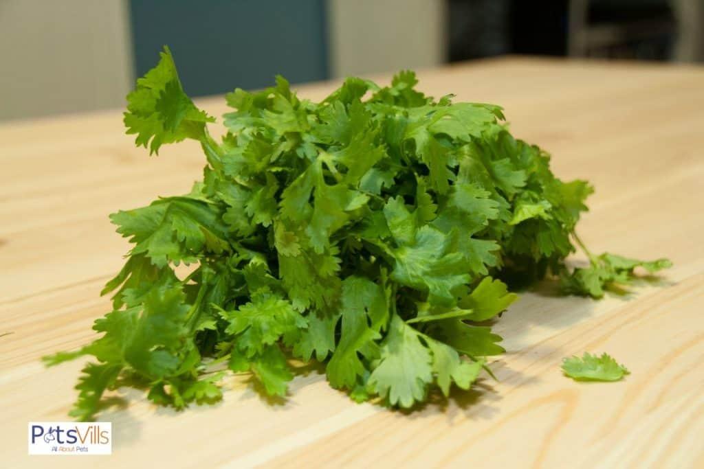 cilantros on a chopping board