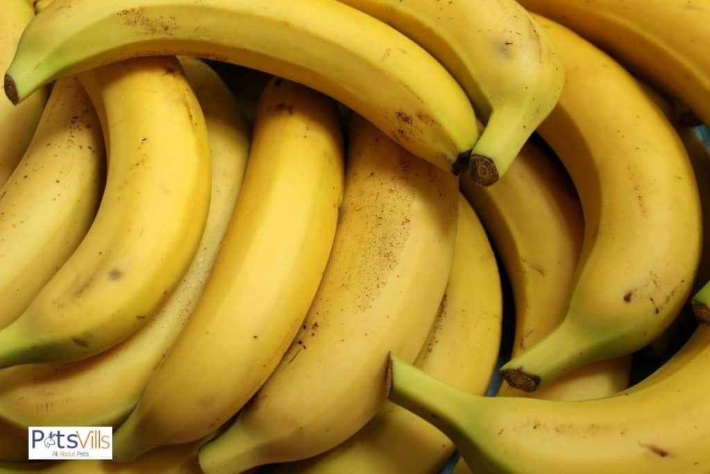 bananas for guinea pigs to eat
