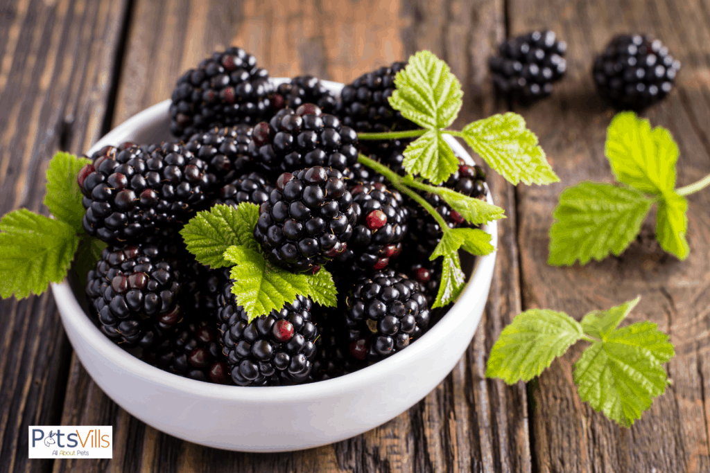 a bowl filled with blackberries, can guinea pigs eat blackberries