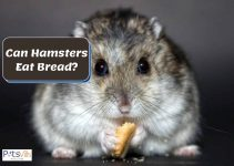 Is Bread Good For Hamsters? [Should They Eat It?]