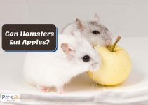 Can Hamsters Have Apples? And How Often?