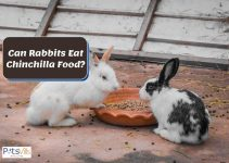 Can Rabbits Eat Chinchilla Food? (Other Great Treats)