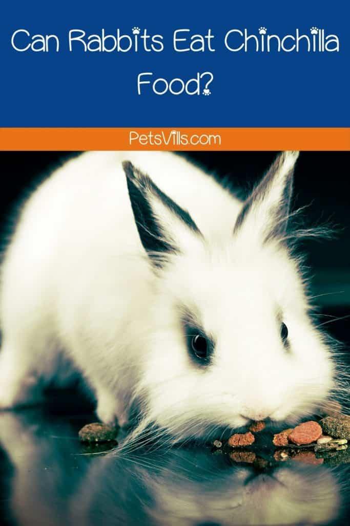 a rabbit eating food, can rabbits eat chinchilla food