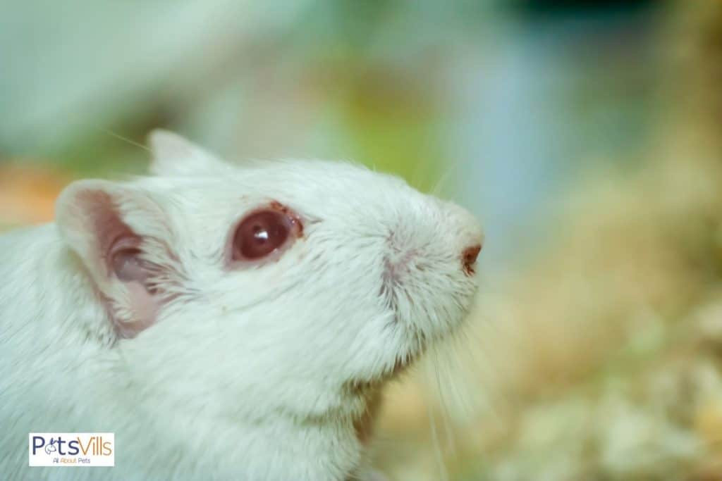a change in hamster eye that is one of the signs of hamster dying