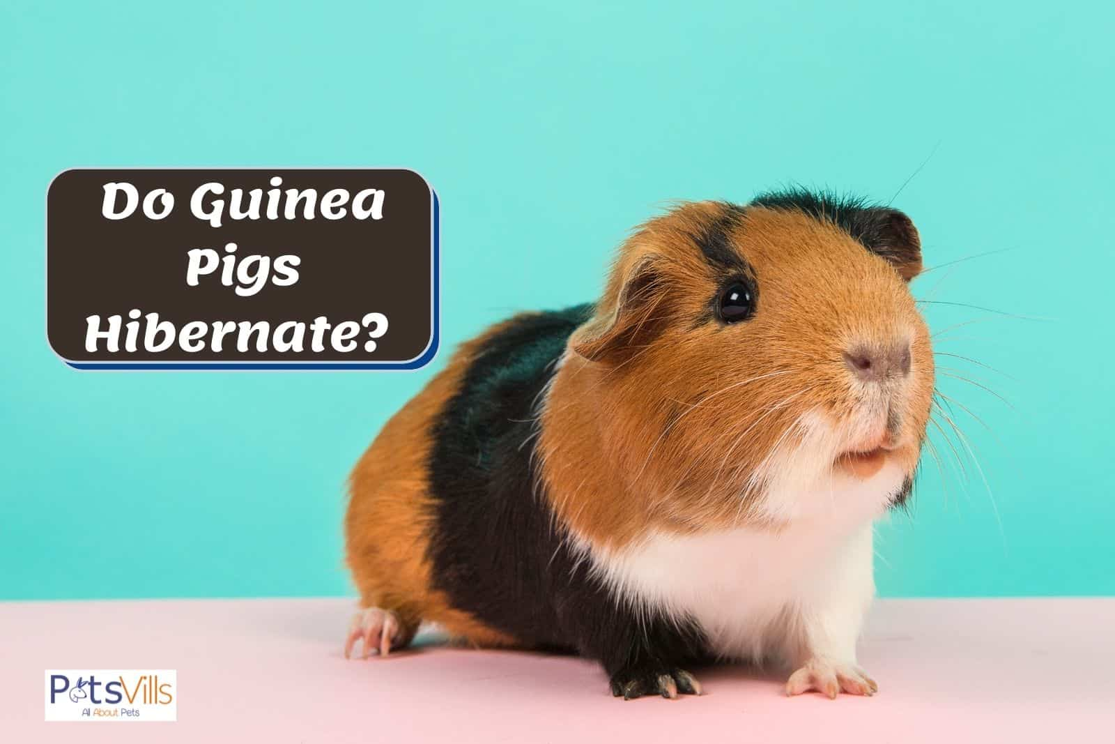 a very cute guinea pig beside the text