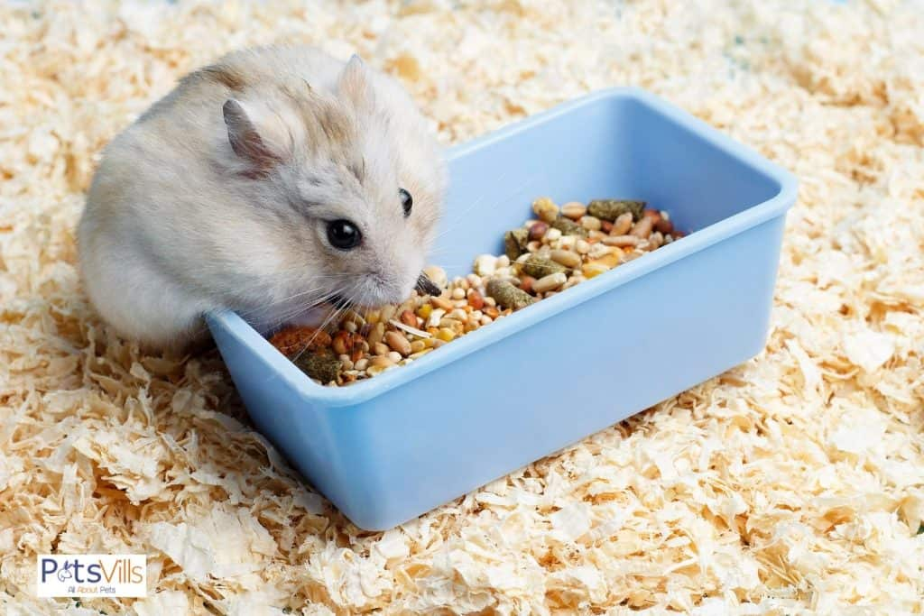 a hamster with extra food in box