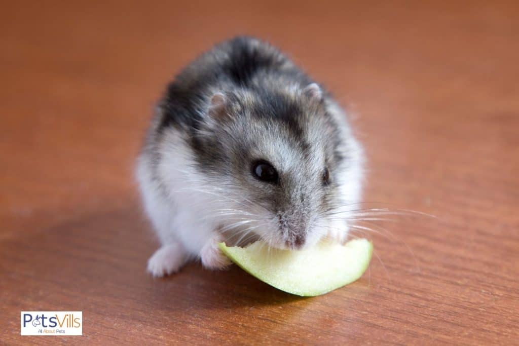 a hamster trying to eat seeds free apple, can hamsters eat apples
