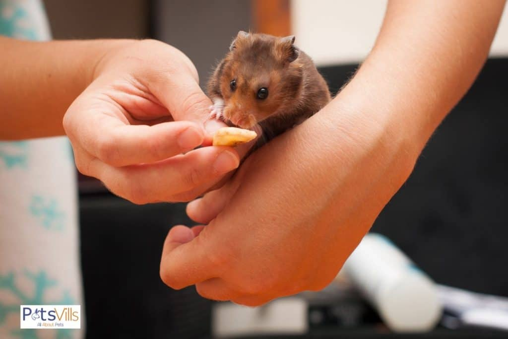a vet is trying to feed sick hamster