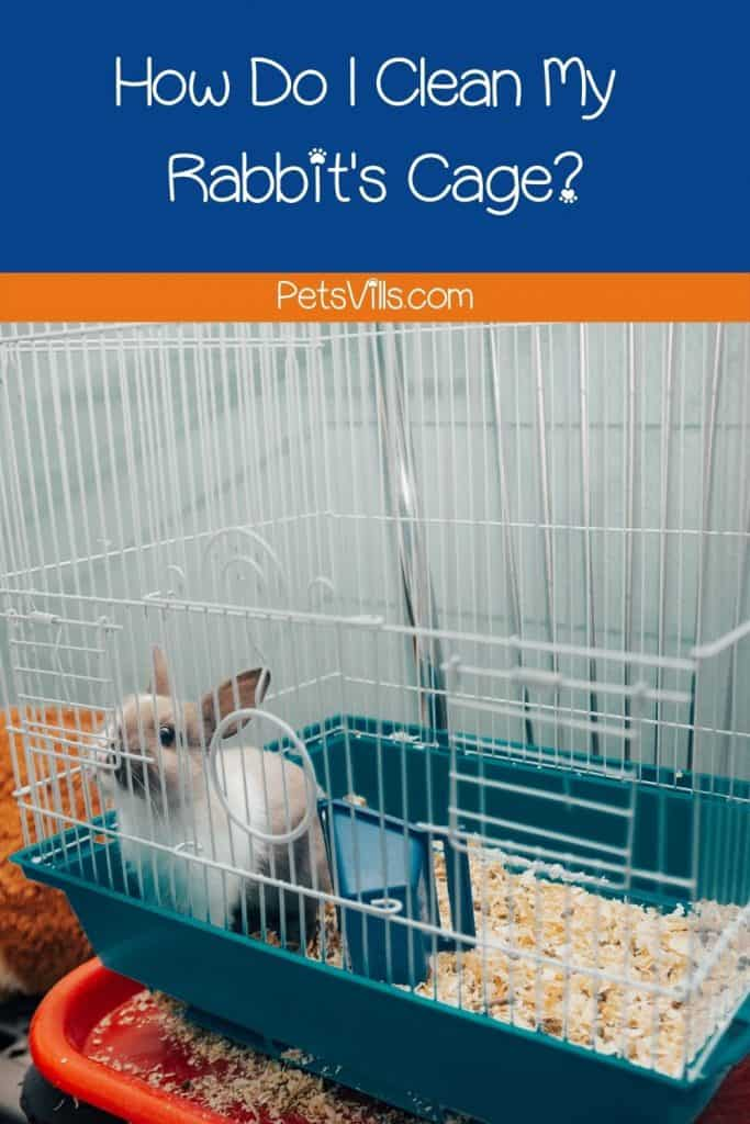 Tips on how to clean a rabbit cage