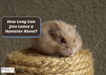How Long Can You Leave a Hamster Alone?
