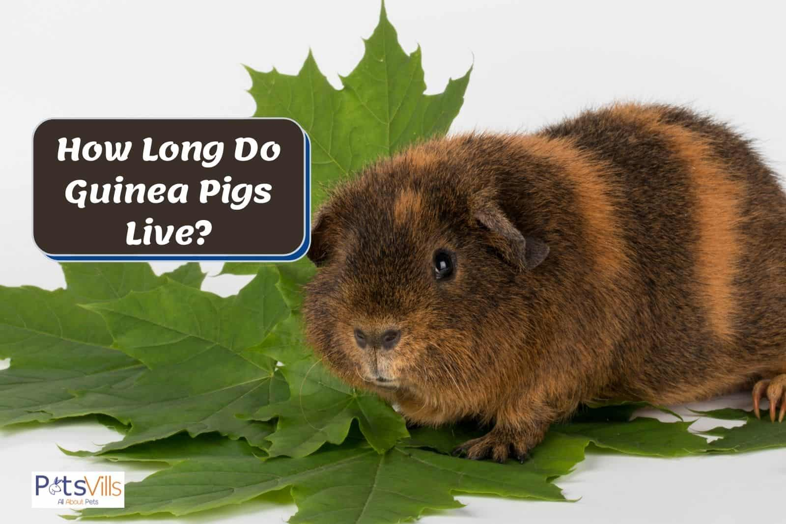 guinea pig on top of a big leaf beside a post