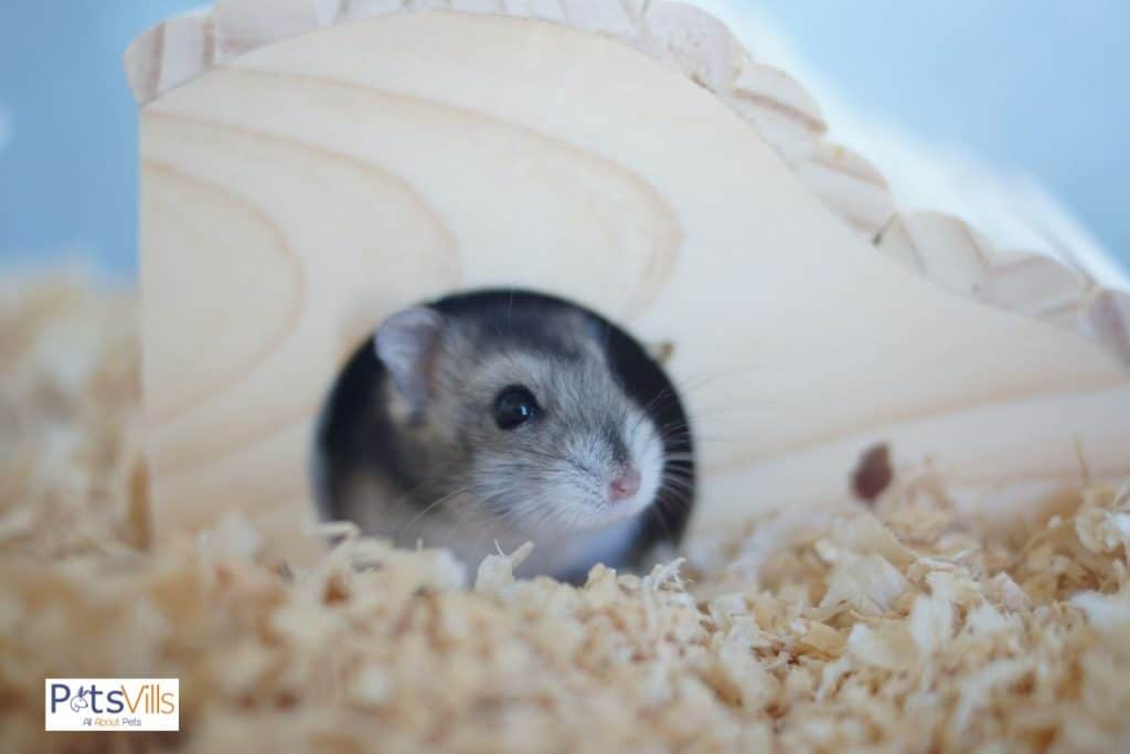 a hamster in his home to be prevented from cold