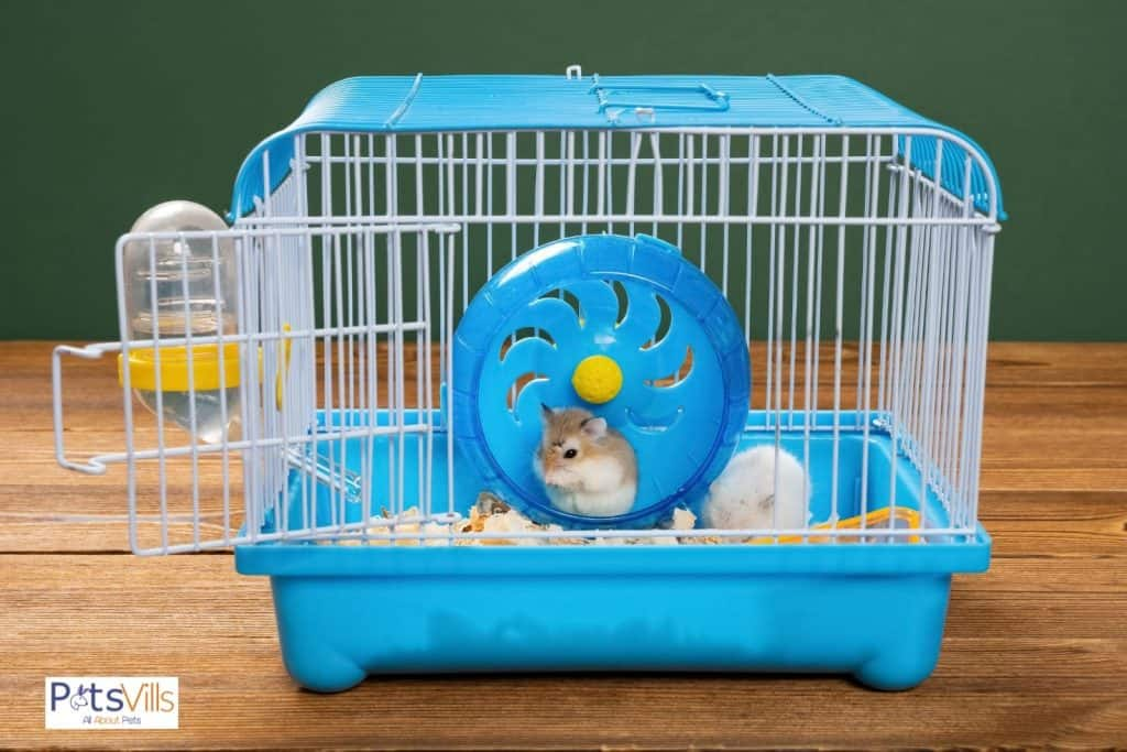 a hamster in a cage that needs too less space