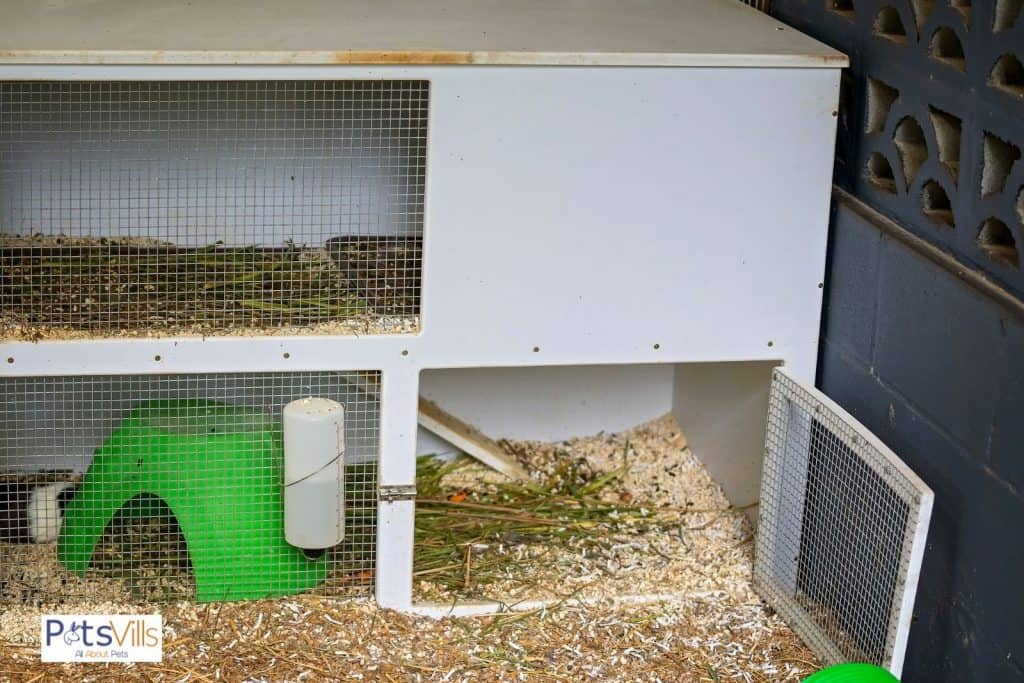 a guinea pig uncleaned cage