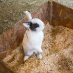 a rabbit in a cage with sawdust bedding