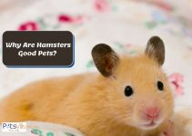 15 Reasons Why Hamsters Are Good Pets