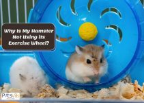 Why is My Hamster Not Using its Exercise Wheel?