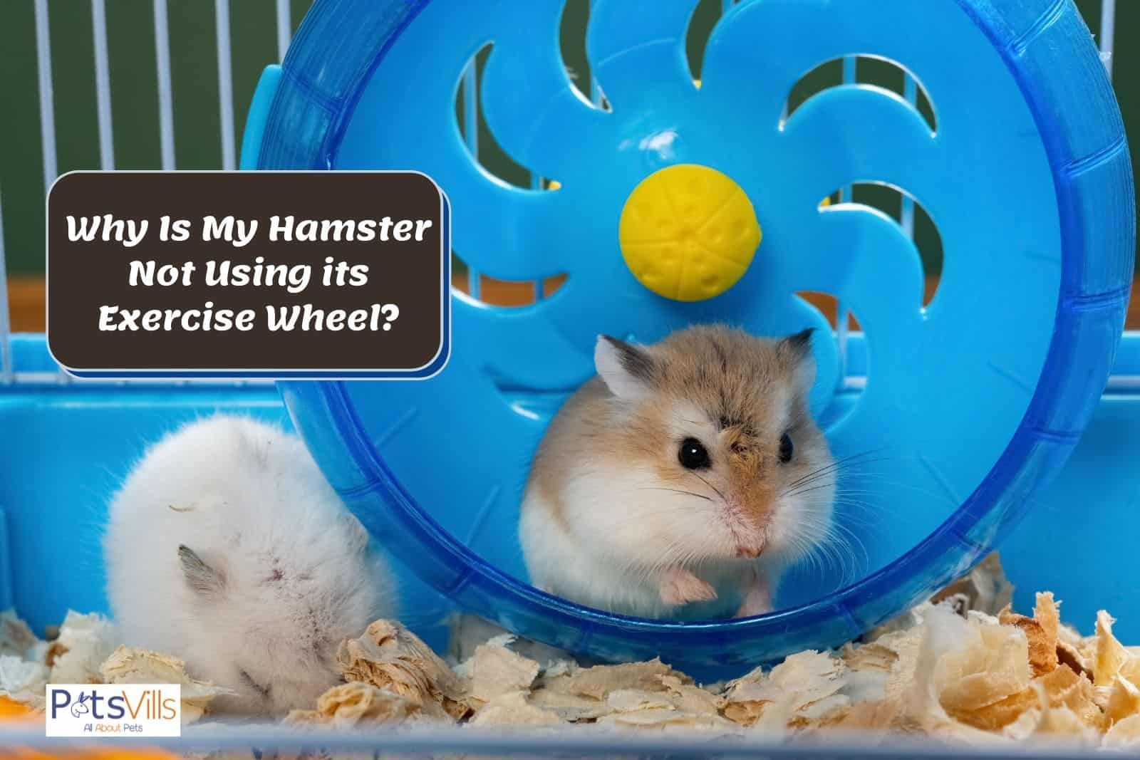 a hamster at a cage with wheel to play