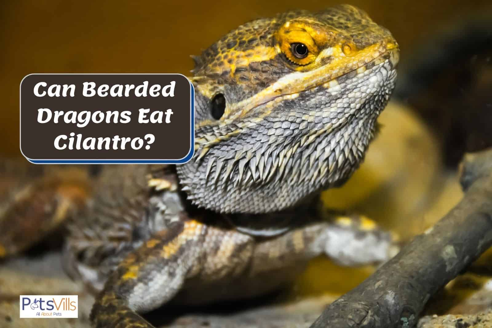 bearded dragon beside a signage that says