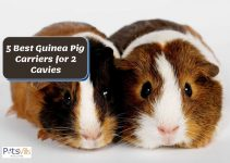Top 5 Guinea Pig Carriers for Multiple Cavies in 2021