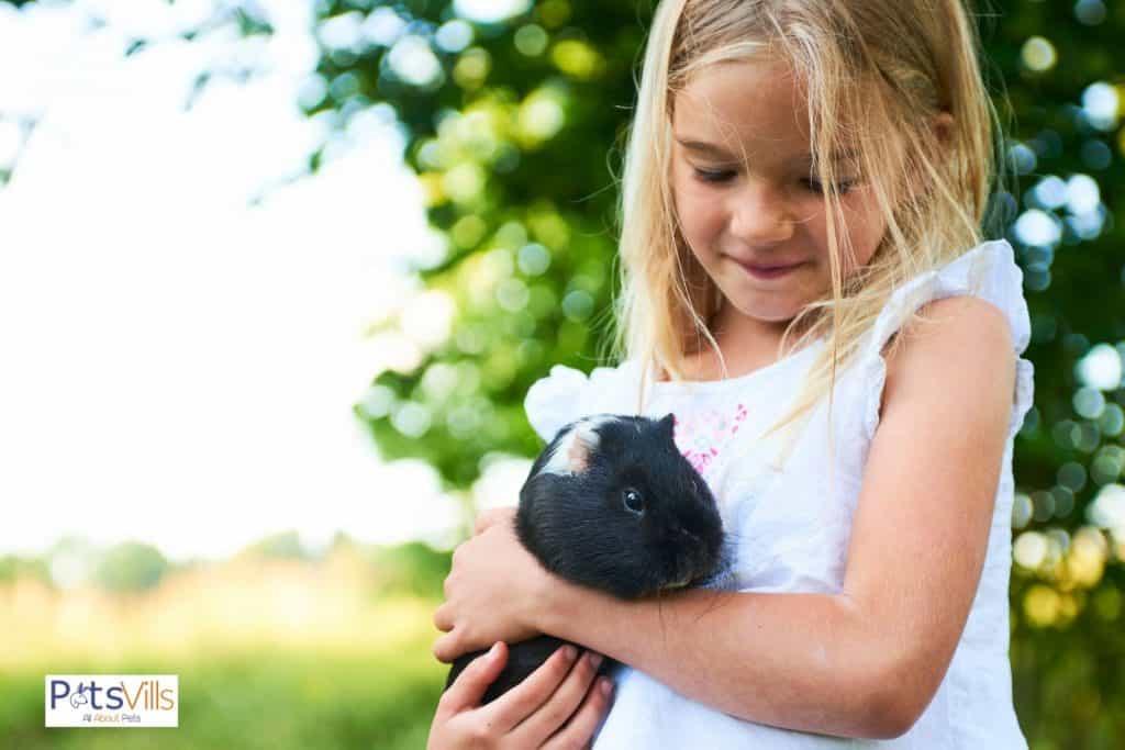 little girl holding a rex guinea pig