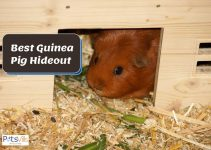 Top 3 Picks for Guinea Pig Hideouts in 2021