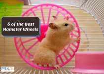 Top 6 Highly-Recommended Hamster Wheels for 2021