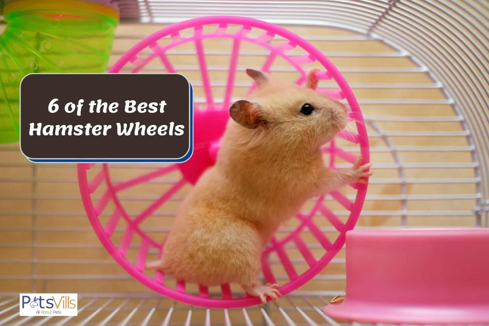 hamster running on her one of the best hamster wheels