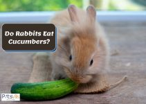 Do Rabbits Eat Cucumbers? How Much To Feed Them?