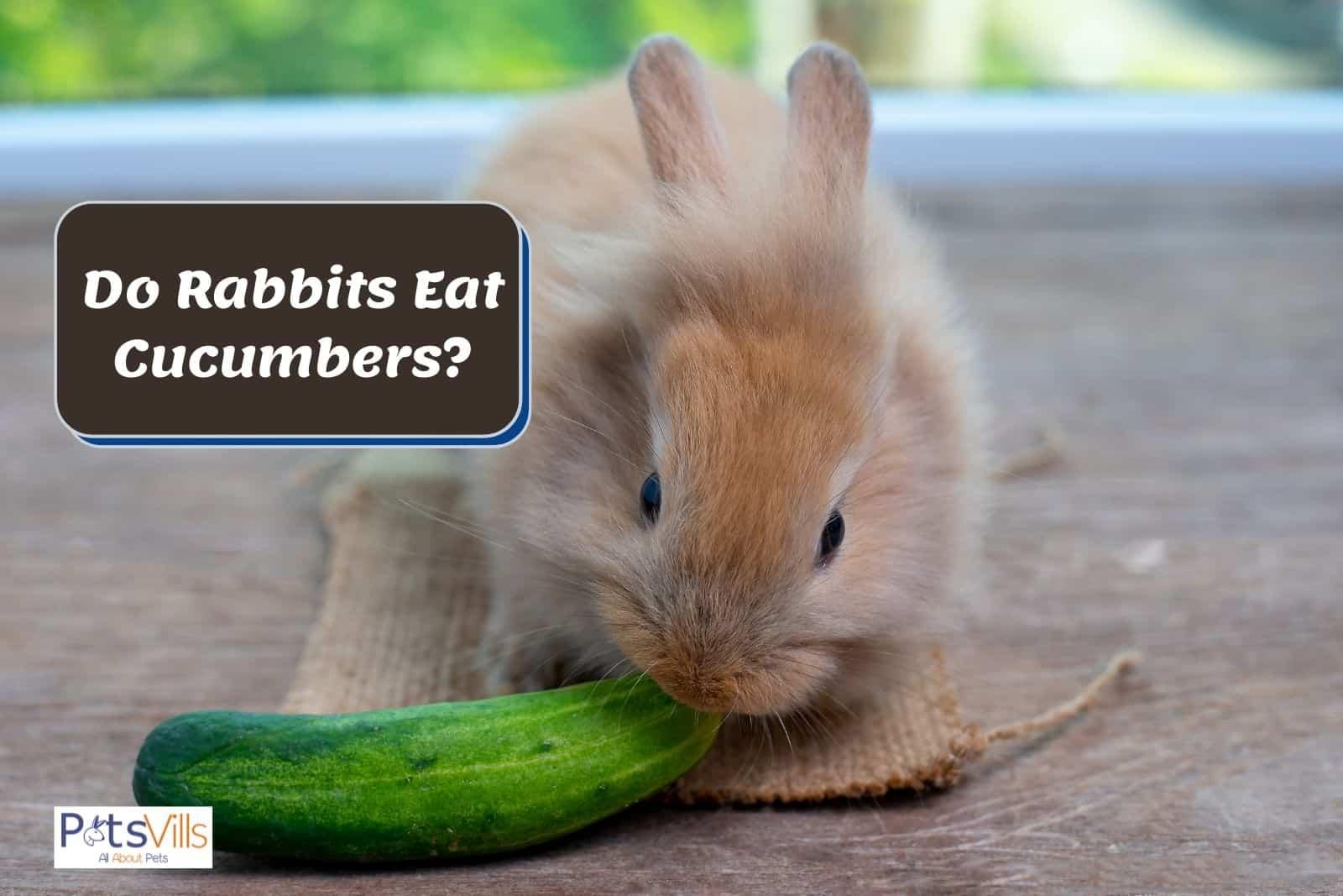 a rabbit eating cucumbers