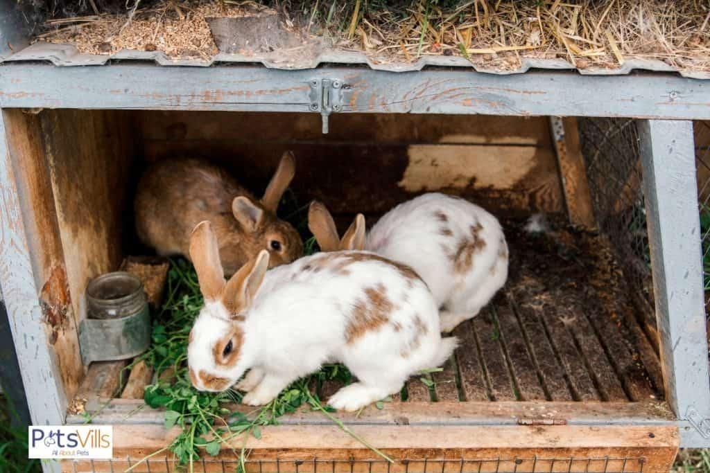 a rabbit eating leaf, can rabbits eat cucumber